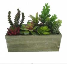 ASSORTED SUCCULENTS IN A WOODEN BOX, 10 X 4-3/4 X 8 IN