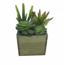 ASSORTED SUCCULENTS IN A SQUARE WOODEN BOX, 5-1/2 X 5-1/2 X